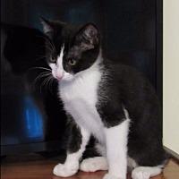 Adopt A Pet :: Princess - Freehold, NJ