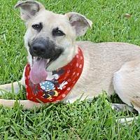 Adopt A Pet :: A - ANGEL - Houston, TX