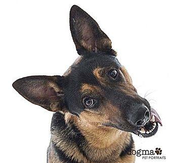 German Shepherd Dog Dog for adoption in San Diego, California - Sarge
