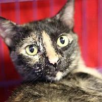 Adopt A Pet :: Kinsey - Winston-Salem, NC