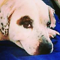 Adopt A Pet :: Bobbie - San Diego, CA
