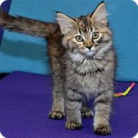 Adopt A Pet :: Skye - Lenexa, KS