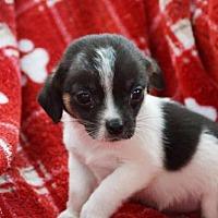 Adopt A Pet :: Pea - Fairmont, WV