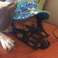 Adopt A Pet :: Bramble - Decatur, GA