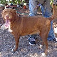 Adopt A Pet :: Brita - Golden Valley, AZ