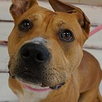 Adopt A Pet :: Richie - Wauwatosa, WI