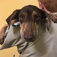 Adopt A Pet :: 17-09-2870b Leila - Dallas, GA