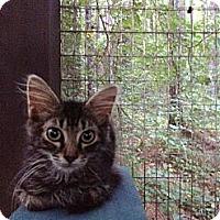 Adopt A Pet :: Arrie - Monroe, GA