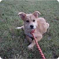 Adopt A Pet :: Misty - Adamsville, TN