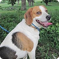 Adopt A Pet :: Willow - Flowery Branch, GA