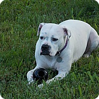Adopt A Pet :: Camila Mae - Dayton, OH