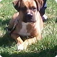 Adopt A Pet :: Sophie - Tipp City, OH