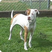 Adopt A Pet :: Gus - Chewelah, WA