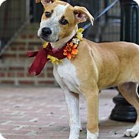 Adopt A Pet :: Giselle - Baton Rouge, LA