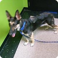 Adopt A Pet :: TINA - SAN ANTONIO, TX