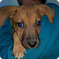 Adopt A Pet :: Liz litter - Pompton Lakes, NJ