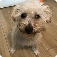 Adopt A Pet :: Gilda - Redondo Beach, CA