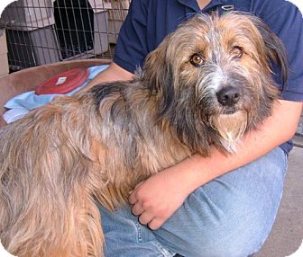 Bearded Collie Mix Dog for adoption in Antioch, California - Tex