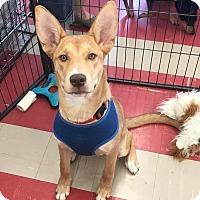 Adopt A Pet :: Navara - Smithtown, NY