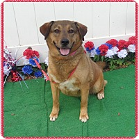 Adopt A Pet :: MANDEE - Marietta, GA