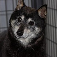 Adopt A Pet :: Kaylee - Colorado Springs, CO