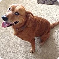 Adopt A Pet :: Sophie - Overland Park, KS