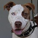Adopt A Pet :: Rosco (TIA)