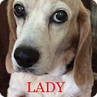 Adopt A Pet :: LADY DAISY - Ventnor City, NJ