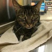 Adopt A Pet :: Jamie - Mesa, AZ