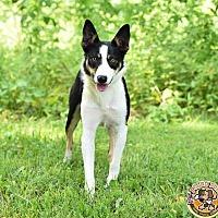 Adopt A Pet :: Savannah - Mt. Vernon, IN