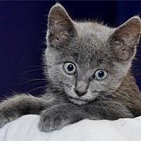 Adopt A Pet :: Ernie - Lenexa, KS