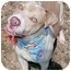 Photo 3 - Pit Bull Terrier Dog for adoption in Huntington, New York - Timothy