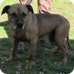 Labrador Retriever/Pit Bull Terrier Mix Dog for adoption in Bloomfield, Connecticut - Wharf