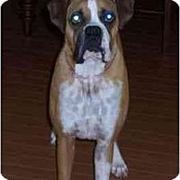 Adopt A Pet :: Goober - Brunswick, GA