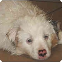 Adopt A Pet :: Pima - Mesa, AZ