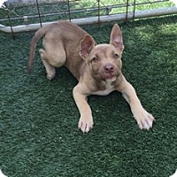 Adopt A Pet :: Hanna - Tustin, CA