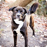 Adopt A Pet :: Lainey - Tinton Falls, NJ