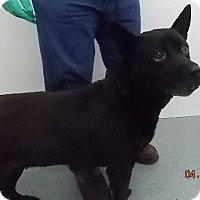 Adopt A Pet :: *URGENT*Gretchen - Orange Lake, FL