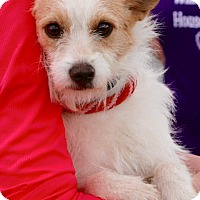 Adopt A Pet :: Adele - Bowie, MD