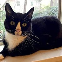 Adopt A Pet :: Tux - Oak Ridge, TN