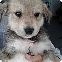 Adopt A Pet :: Supernatural Litter - Kyle, TX