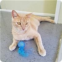 Adopt A Pet :: Angelo - Umatilla, FL