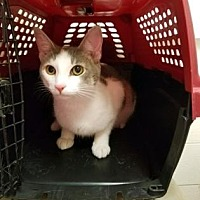 Adopt A Pet :: Princess FIona - Anderson, IN