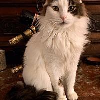 Adopt A Pet :: Baxter - Pasadena, CA