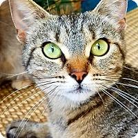 Adopt A Pet :: JENZEE - Woodland Hills, CA