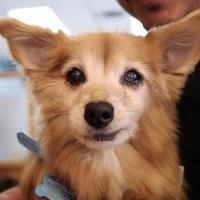 Adopt A Pet :: Zelda - San Francisco, CA