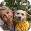 Photo 1 - Wheaten Terrier Mix Dog for adoption in Coral Springs, Florida - CoCo