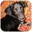 Photo 1 - Border Collie Mix Dog for adoption in Sheboygan, Wisconsin - Sasha