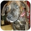 Photo 2 - American Pit Bull Terrier Mix Puppy for adoption in Detroit, Michigan - Moe-Pending