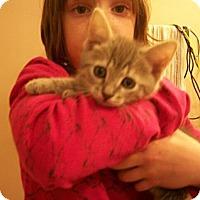 Adopt A Pet :: Bobby - Reston, VA